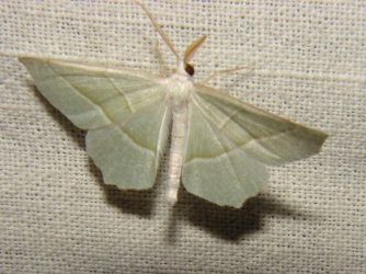 rencontres entomologiques juvisy