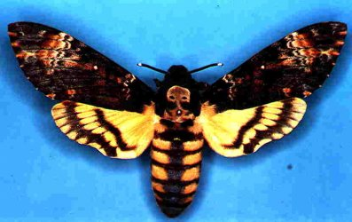 Acherontia atropos Collection Levesque Robert Niort 79 {JPEG}