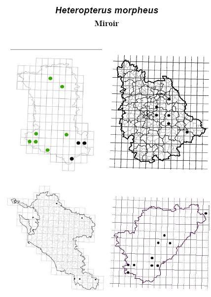 Mots-clés   12. 16 - 30 Juin - Papillons de Poitou-Charentes d0362280daff
